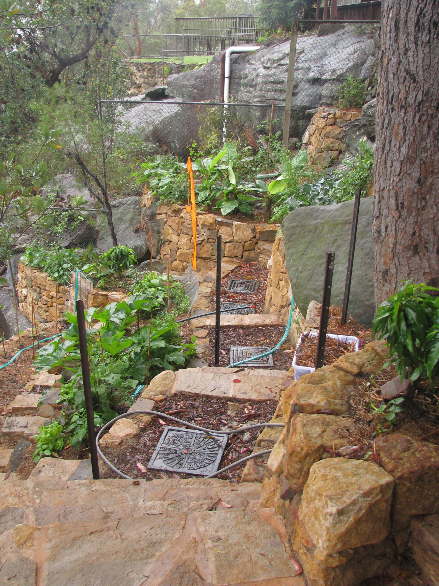 Backyard Permaculture Gardening Australia :  is not ideal for pest management in an urban Permaculture garden