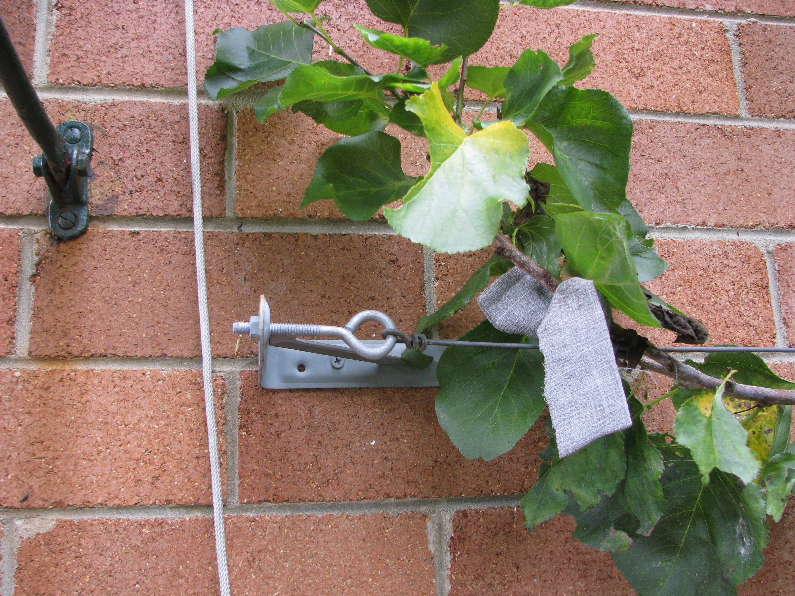 Food gardens ordinary 2 extraordinary for Attach wire to wall