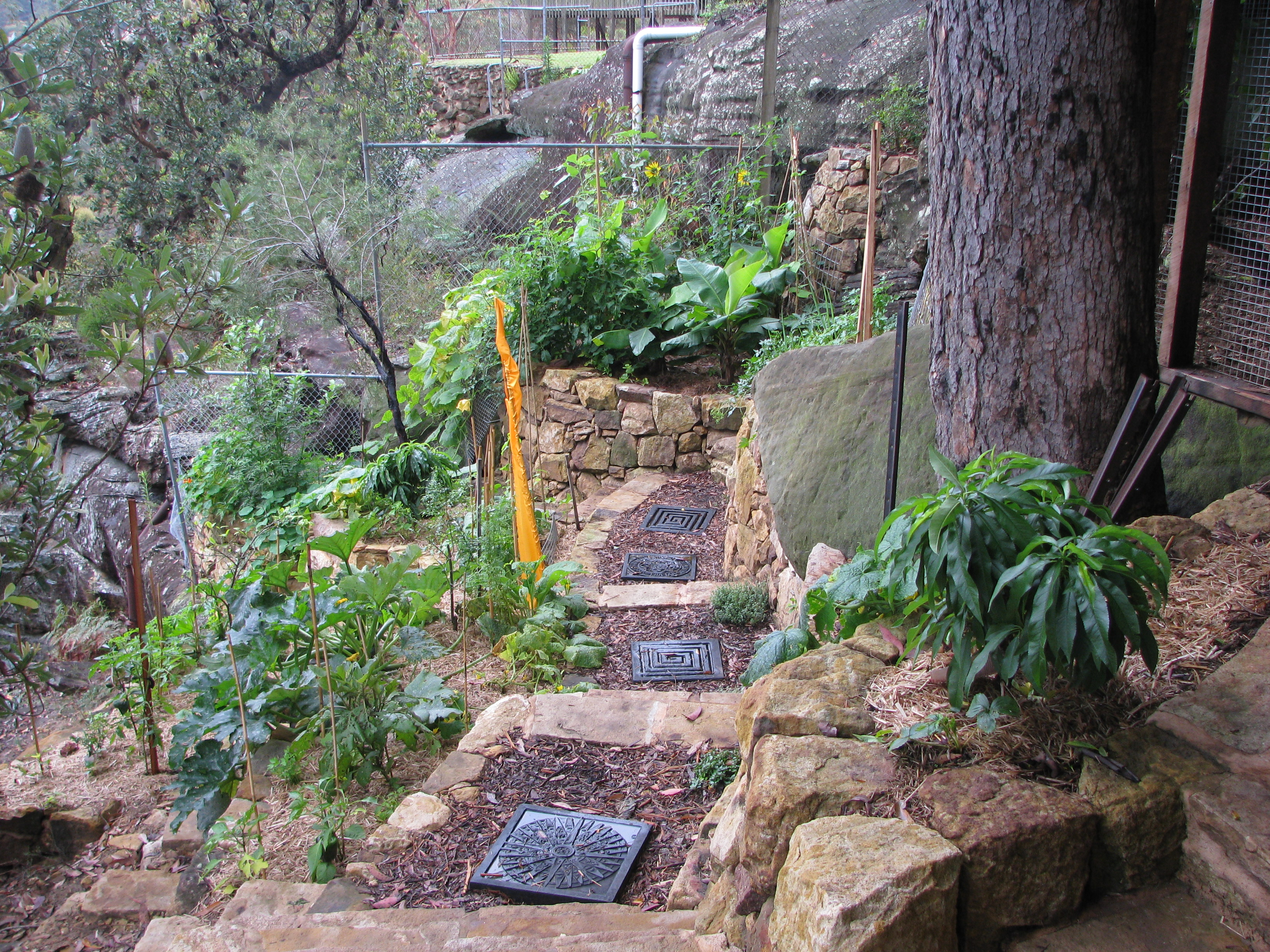 The 25 best permaculture design ideas on pinterest for Small permaculture garden designs