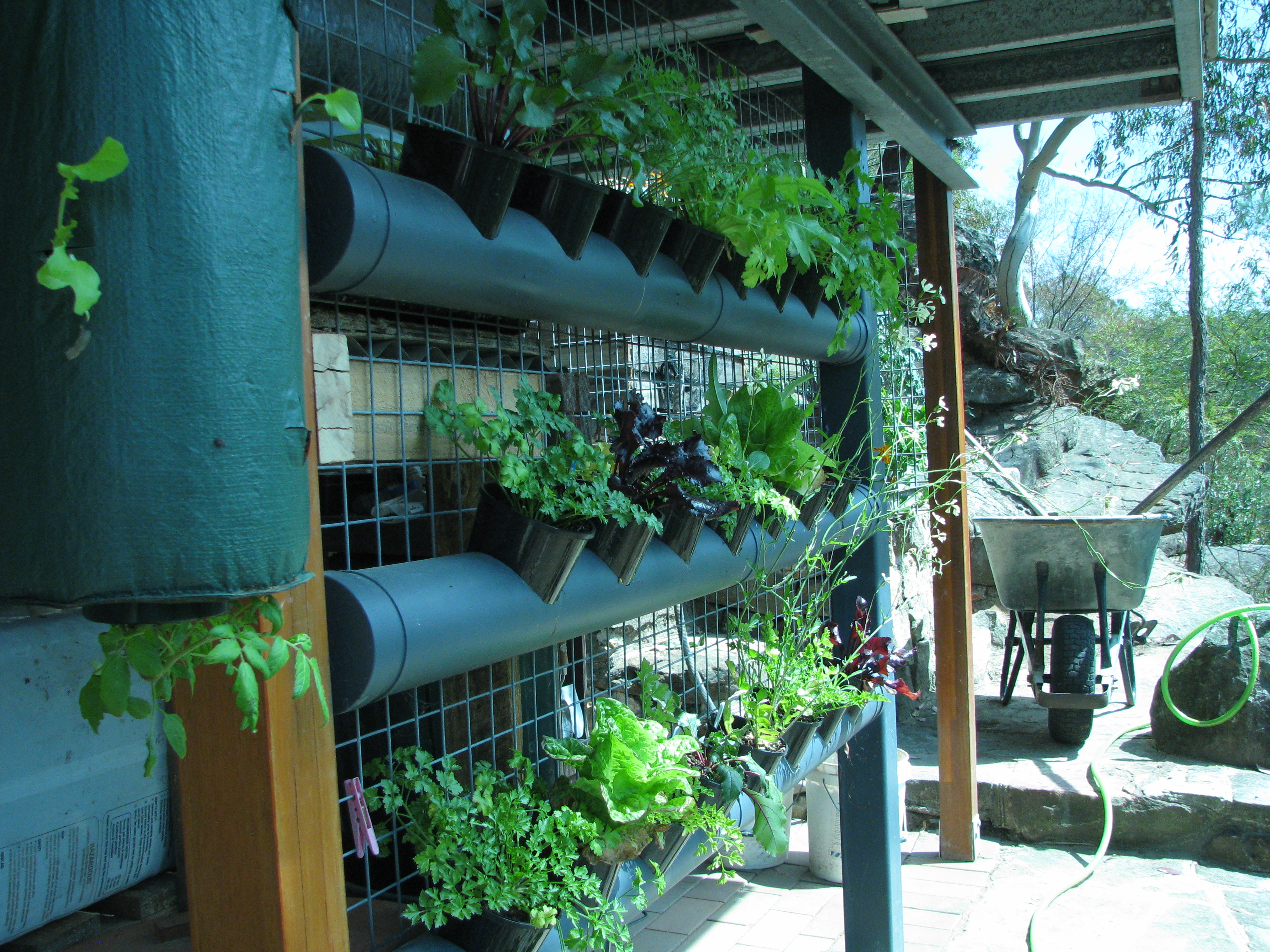Vertical garden from pvc pipe ordinary 2 extraordinary - Vertical garden ...