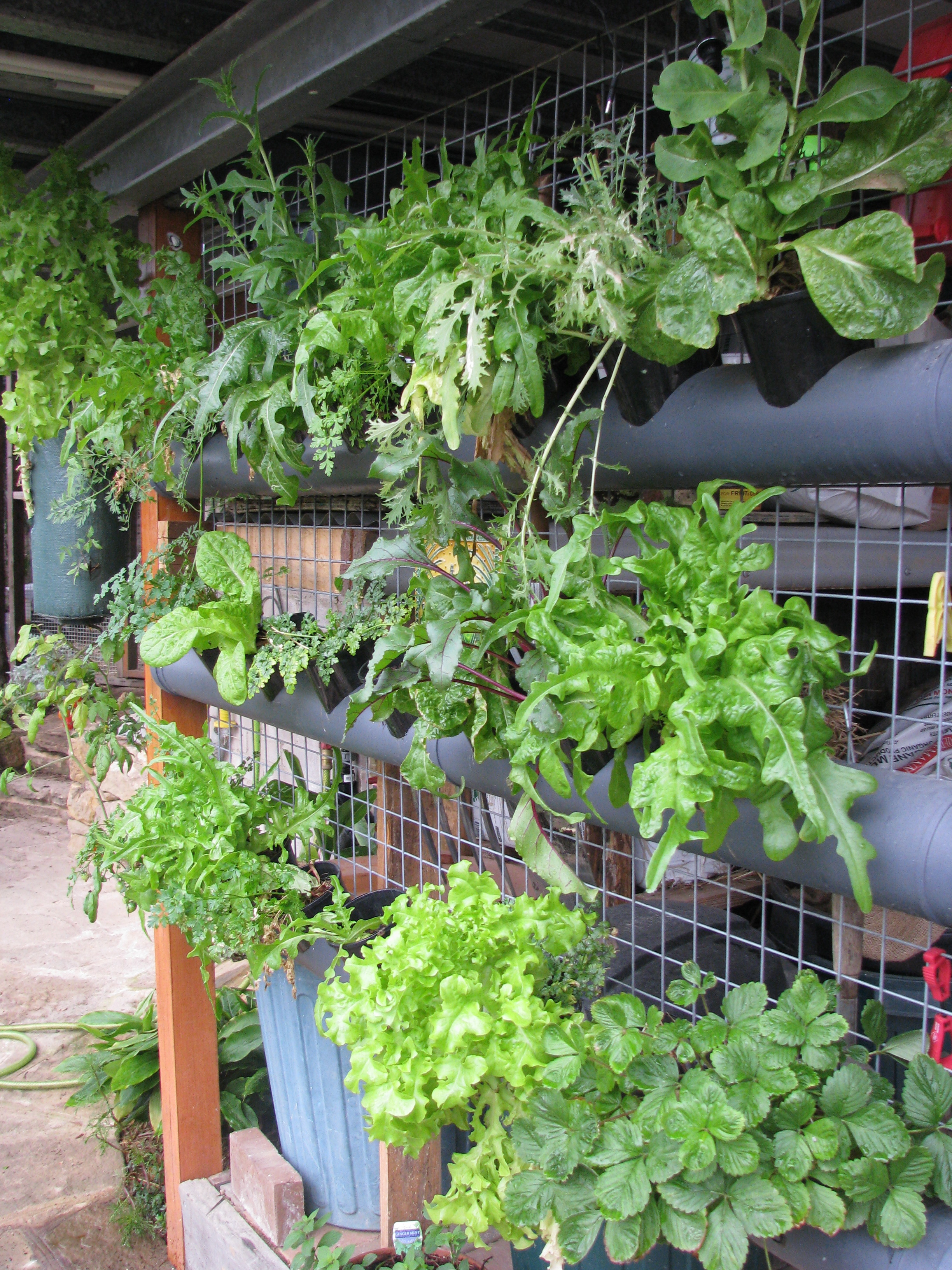 Vertical Garden Using Stormwater Pipes Ordinary 2